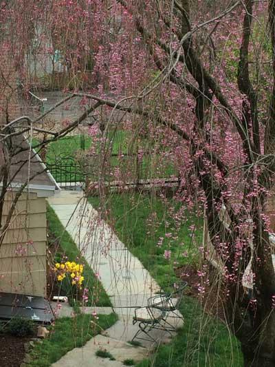 Spring Blossoms Montclair NJ