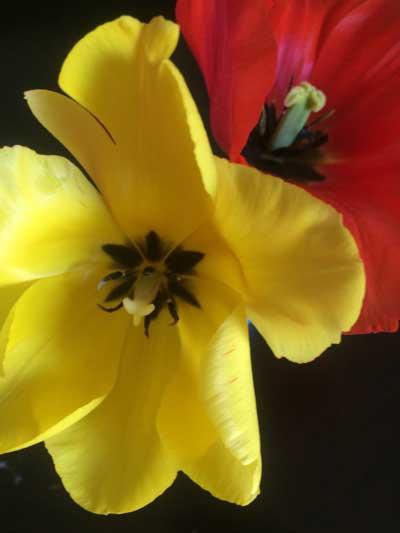 Spring Flowers Montclair NJ