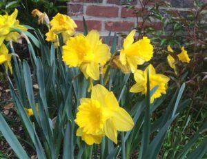 Spring Garden Inspiration (Spring Has Sprung!)