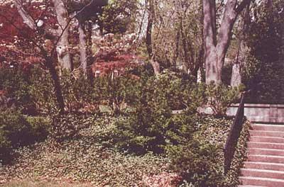 Montclair landscape design before photo