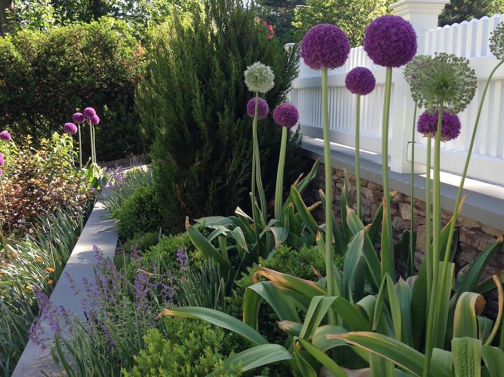 flowers blooming in Montclair NJ garden
