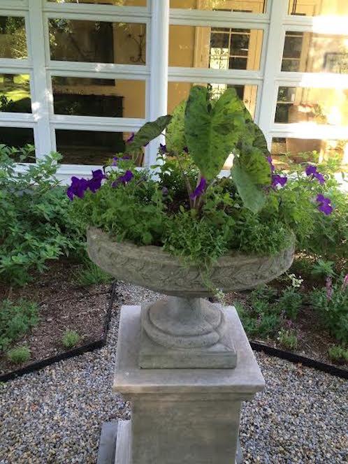 purple flowers in a pot