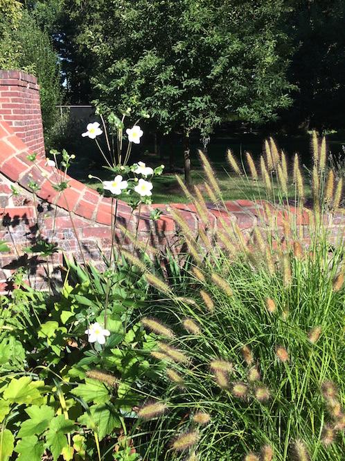 Montclair landscape design in summer