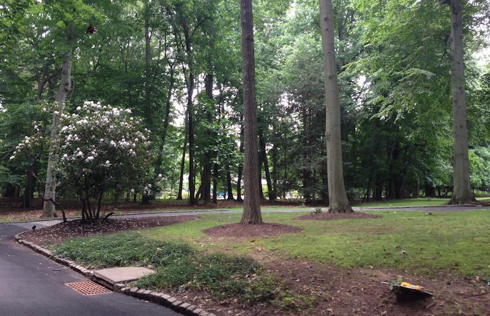 A Montclair NJ landscape designer begins working on this bland garden
