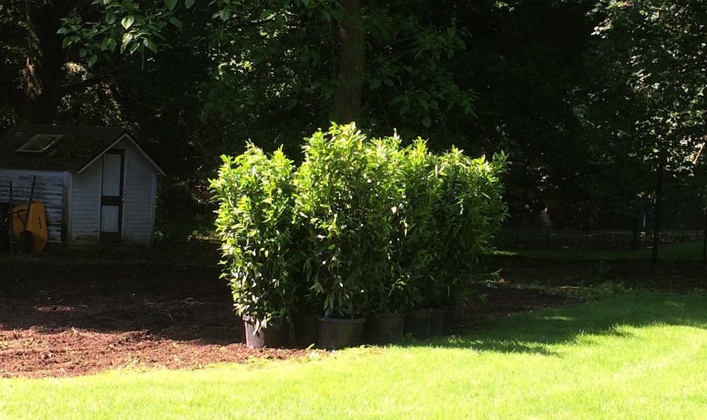 trees for a garden in midatlantic