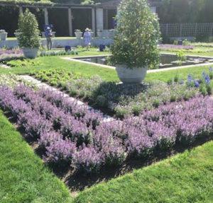 Garden Club Field Trip: Newport Flower Show
