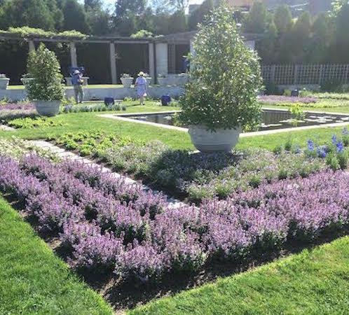 gardens seen on trip to Newport Flower Show