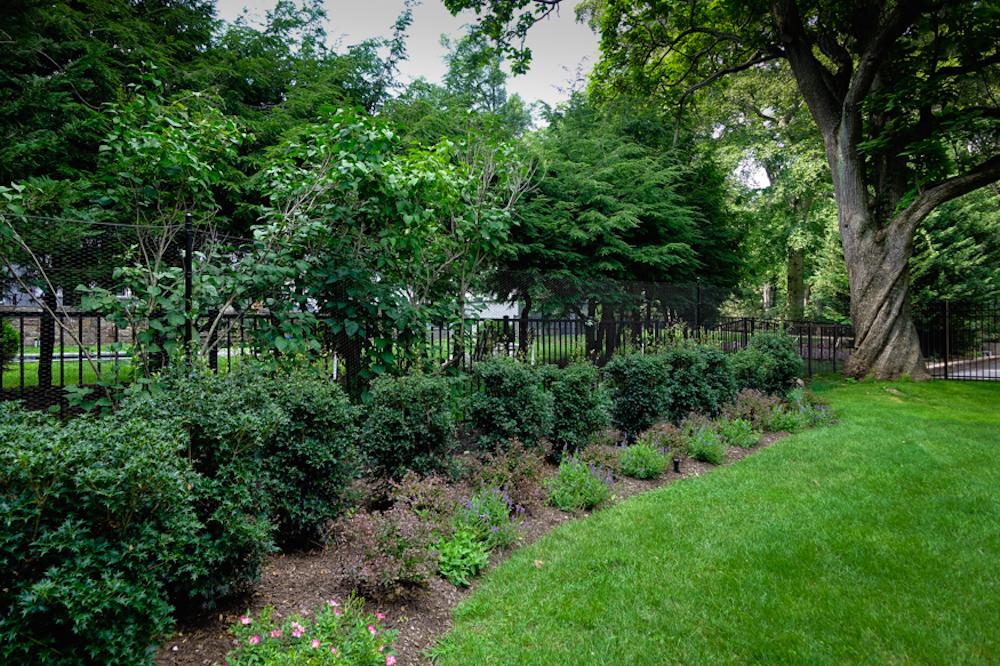 A Montclair Landscape Designer Plants Osmanthus
