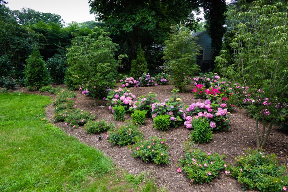 Summer flowers for Northeast shown in Montclair garden design