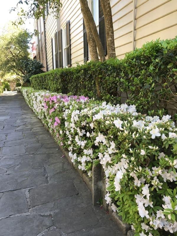 Charleston flower club