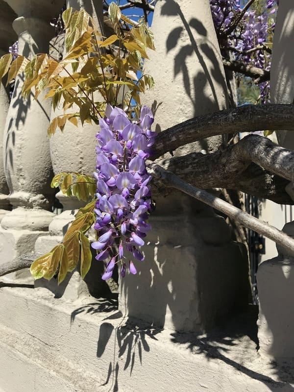 flowers in the garden club