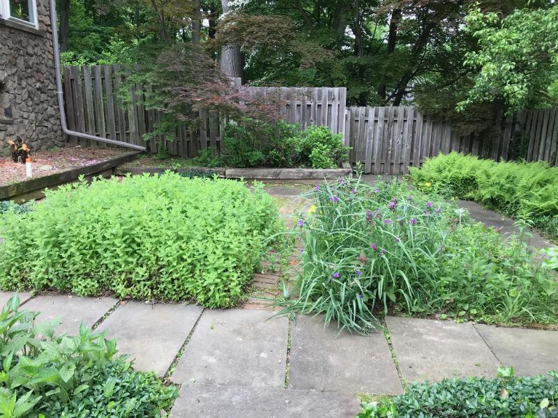 Landscape Plants Before