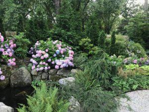 Gardening in the Time of the Coronavirus